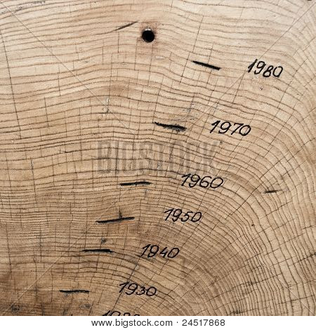 Tree trunk, cross section showing annual growth rings