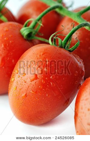 Piccadilly tomate close-up