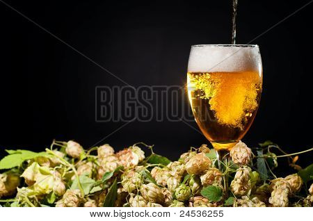 Beer Flowing In Glass With Hop