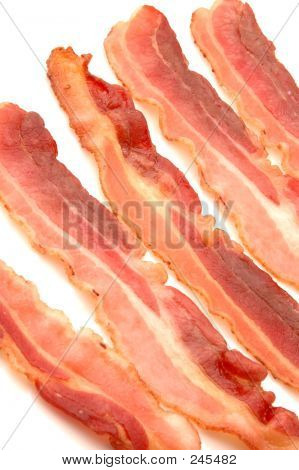 Bacon 516