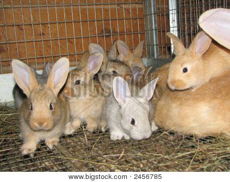 Rabbit Litter