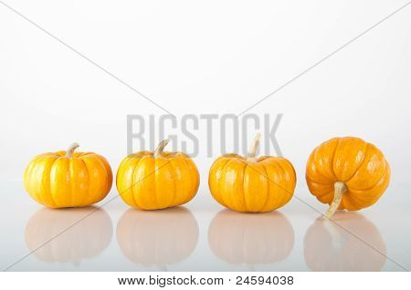 Mini-pumpkins on reflective surface, isolated on white