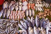 Closeup Of Assorted Seafood And Fish At Fish Market In Istanbul, Turkey, Selective Focus. Food Backg poster