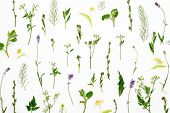 Botany Decorative Herbal Background, Flat Lay Composition poster