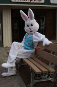 picture of buck teeth  - easter bunny on a bench hanging out in the spring - JPG