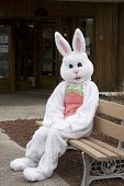 foto of buck teeth  - easter bunny hanging out on bench out side in the sun - JPG