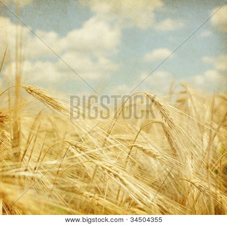 Texture of old paper.  field of wheat.