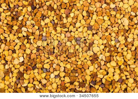 Abstract Background: Bea Gathered Pollen Granules