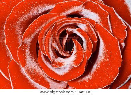 Rime Rose