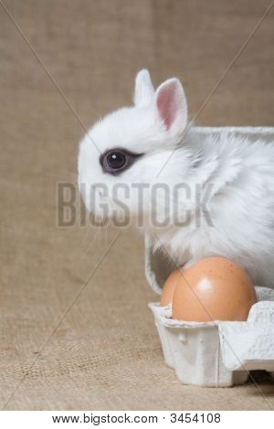 White Bunny In The Eggbox