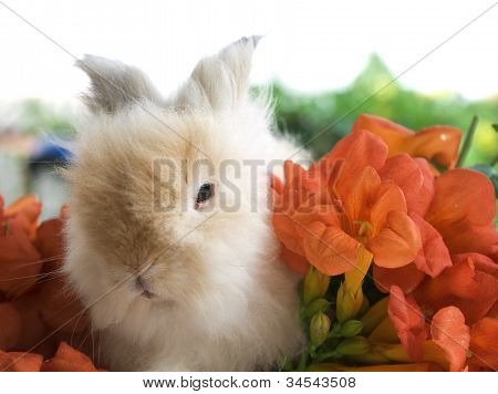 Brown Rabbit Eating Morning Calm Flower