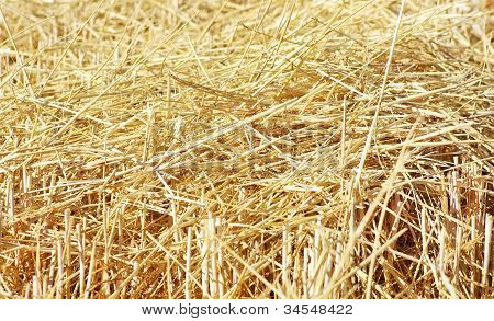 Closeup Of Straw Texture On Field