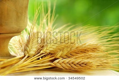 Spikes Of Wheat