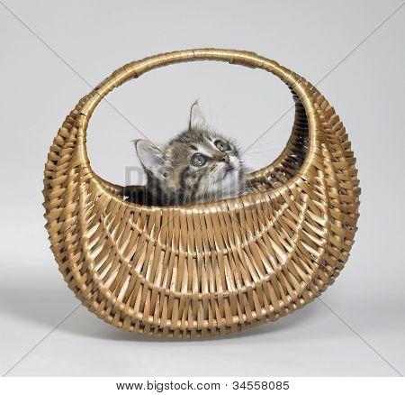 Kitten Looking Up In Basket