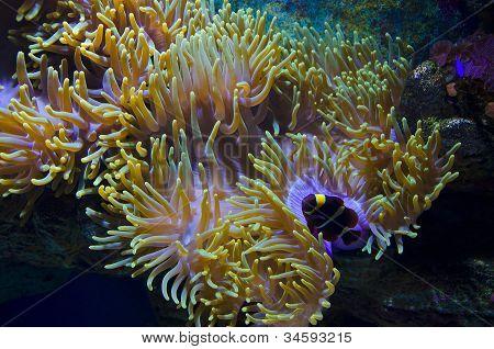 Undersea beauty