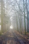 Road Through A Mysterious Dark Forest In Fog With Green Leaves On A Spring Morning With The Sun Risi poster