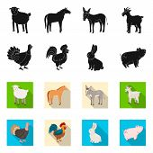 Vector Illustration Of Breeding And Kitchen Sign. Set Of Breeding And Organic Stock Symbol For Web. poster