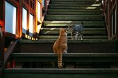 Adorable Striped And Spotted Cats Walking On Street. Cute Domestic Animals On Stairs. Playful Pet Wa poster