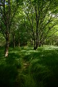 Walkway Through Tall Grass In Grove Of Trees In Smoky Mountains poster