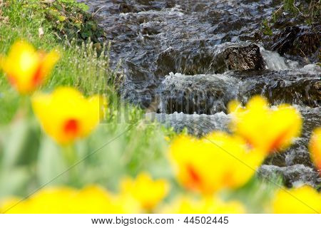 Beautiful Stream With Tulips In The Front