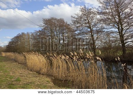 Canal And Reeds