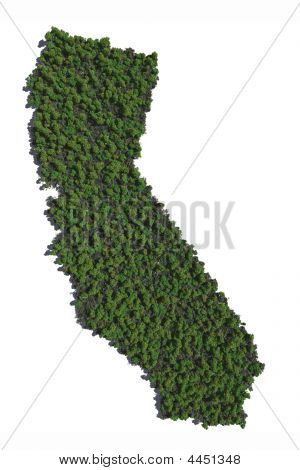 California In Trees