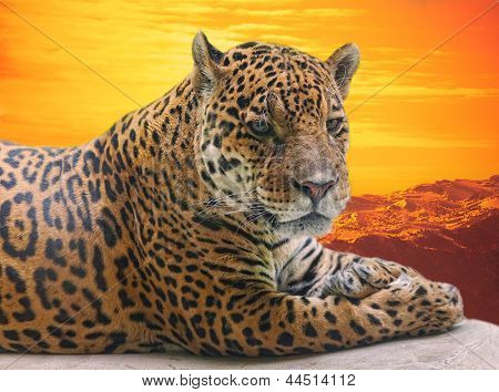 Leopard to lie on a log against a sunset