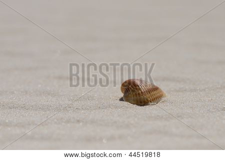 Orange shell on a clean with sandy beach from the side