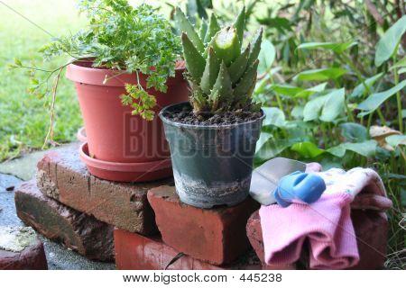 Backyard Gardening Vignette