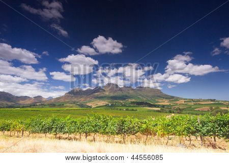 Wine Route, Stellenbosch, South Africa