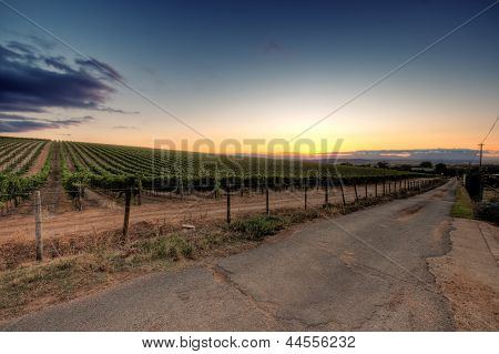 Sunset over a vineyard