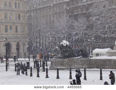 Trafalgar Snow Lion