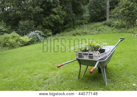 Gardening In England Wheelbarrow