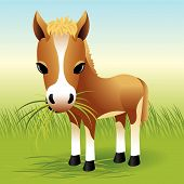 Baby Animal Collection: Horse poster