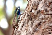 stock photo of tuatara  - chameleon on a Tree It looks relaxation - JPG