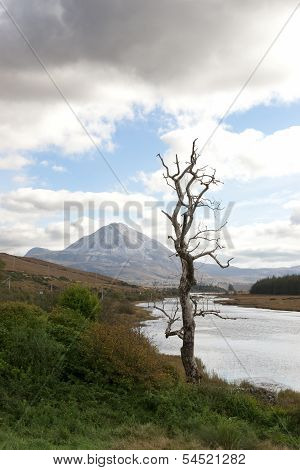 Single Tree In Donegal Scenic View