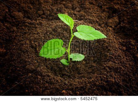New Born Plant