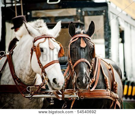 Horse Carriage In City