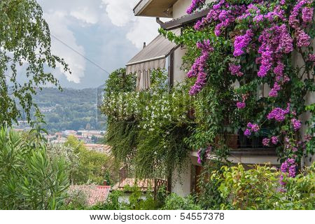 Italian House With Bougainvilleas
