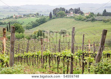 Homes Over Tuscany Vineyard