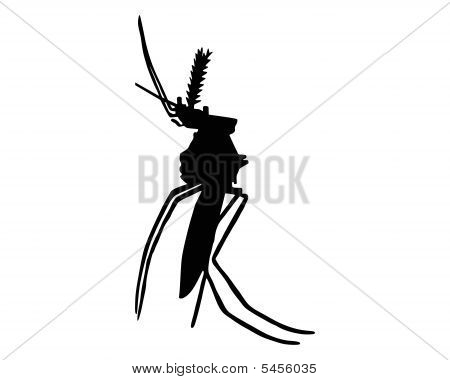 The Black Silhouette Of A Mosquito On White