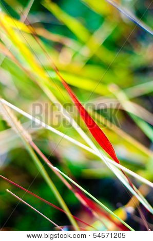 Grass Colors In Autumn. Nature Background.