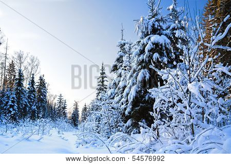 Winter Landscape With The Forest