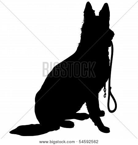 Shepherd With Leash