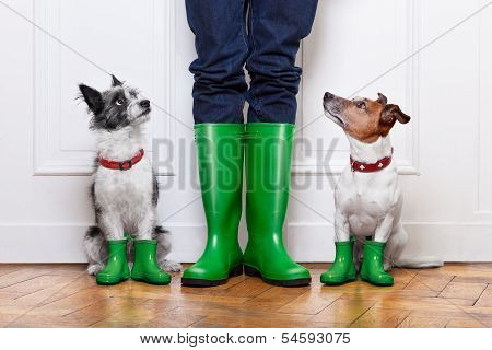 Two Dogs And Owner