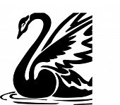 stock photo of black swan  - Black swan with crown vector tattoo design - JPG