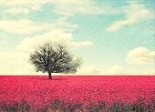 pic of row trees  - a beautiful tree in a red field - JPG