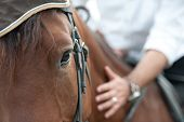 stock photo of harness  - closeup of a horse head with detail on the eye and on rider hand - JPG