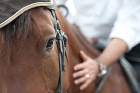 stock photo of horse-riders  - closeup of a horse head with detail on the eye and on rider hand - JPG