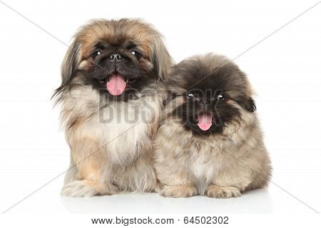 Pekinese Dog With Puppy